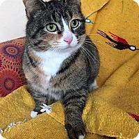 Adopt A Pet :: Astrid - Buffalo, NY