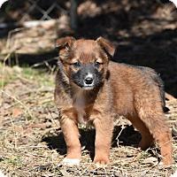 Adopt A Pet :: Tait - Groton, MA
