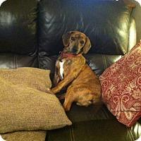 Adopt A Pet :: Penny - McArthur, OH