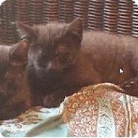 Adopt A Pet :: Lasarus & Samantha - Acme, PA