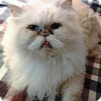 Adopt A Pet :: Jessie - Columbus, OH