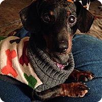Adopt A Pet :: ODIN - Portland, OR