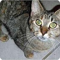 Adopt A Pet :: Sarah - Hamilton, ON