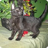Adopt A Pet :: Perilla - Clearfield, UT