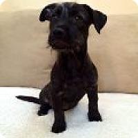 Adopt A Pet :: Kali - Phoenix, AZ