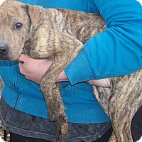 Adopt A Pet :: Reese - Antioch, IL