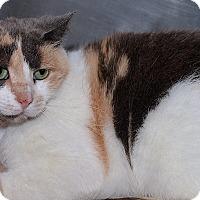Adopt A Pet :: Tippy - Medina, OH