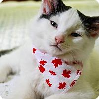 Adopt A Pet :: Lui - Douglas, ON