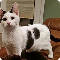 Adopt A Pet :: Leia - Trenton, NJ