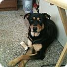 Adopt A Pet :: Sara
