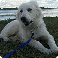 Adopt A Pet :: Hawkeye - Kyle, TX