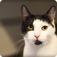 Adopt A Pet :: Theo - Lincoln, NE