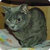 Adopt A Pet :: Kizmet - Merrifield, VA