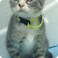 Adopt A Pet :: Crackle - San Ysidro, CA