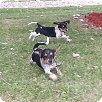 Adopt A Pet :: Karma and Kendra - Richmond, MI