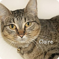 Adopt A Pet :: Claire - Idaho Falls, ID