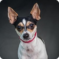 Adopt A Pet :: Serena - Loxahatchee, FL