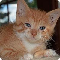 Adopt A Pet :: Kellan - Williamston, MI