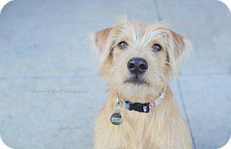 Terrier (Unknown Type, Medium) Mix Dog for adoption in Salt Lake City, Utah - Zira