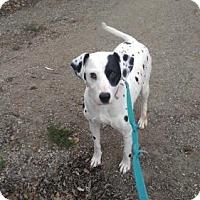 Adopt A Pet :: Heidi Sue - South Amana, IA