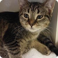 Adopt A Pet :: Nina - Cloquet, MN
