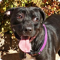 Adopt A Pet :: Absolutely Andre - Albuquerque, NM