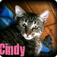 Adopt A Pet :: Cindy - Covington, LA