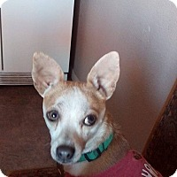 Adopt A Pet :: Tanner-Adopt Me! - Victorville, CA