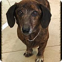 Adopt A Pet :: April - Los Alamitos, CA
