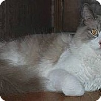 Adopt A Pet :: Klaus - Ennis, TX
