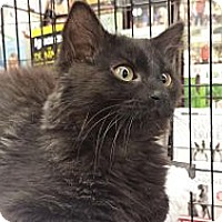 Adopt A Pet :: Puck - Edmond, OK