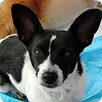 Adopt A Pet :: Sierra - Tumwater, WA