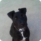 Adopt A Pet :: Molly!