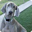 Adopt A Pet :: BOSCHE