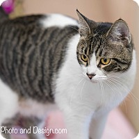 Adopt A Pet :: Luna - Fountain Hills, AZ