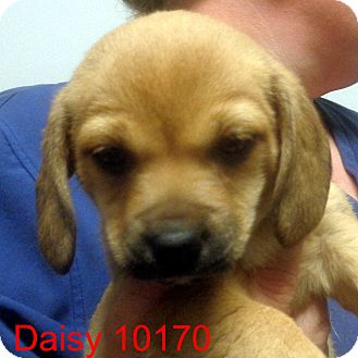Small Dog Adoption Vermont