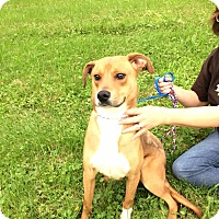 Adopt A Pet :: Ritchie - ADOPTED! - Zanesville, OH