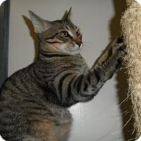 Adopt A Pet :: Atticus - Milwaukee, WI
