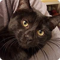 Adopt A Pet :: Ninja - Horsham, PA