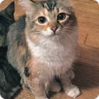 Adopt A Pet :: Johanna - Colorado Springs, CO