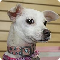 Adopt A Pet :: Mindy-Adopted! - Detroit, MI