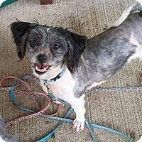 Adopt A Pet :: Mallia - Fairfield, OH