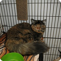 Adopt A Pet :: Tigerlily - Milwaukee, WI