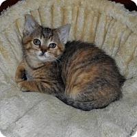 Adopt A Pet :: Annie - Richmond Hill, ON