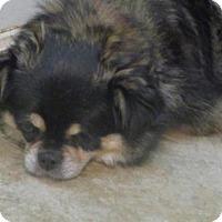 Adopt A Pet :: Penny - Brunswick, ME