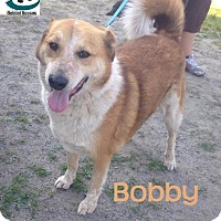 Adopt A Pet :: Bobby - Adopted July 2016 - Huntsville, ON