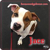 Adopt A Pet :: Jace - Toledo, OH
