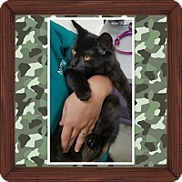 Adopt A Pet :: Mowgli - Cedar Springs, MI