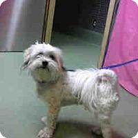 Adopt A Pet :: URGENT 10/29 @ DEVORE - San Bernardino, CA