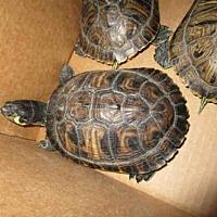 Adopt A Pet :: A069507 - Burbank, CA